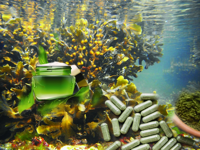 Discovering algae's power as a renewable resource