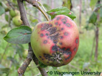 Researchers make breakthrough in apple disease research