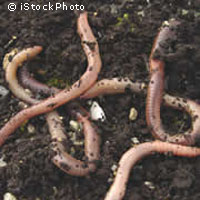 How earthworms literally turn the earth upside down