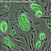 UK launches national stem cell network