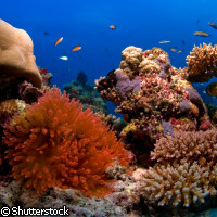 Scientists find evidence of marine biodiversity hotspots