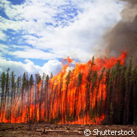 The red-hot art of forest fire management