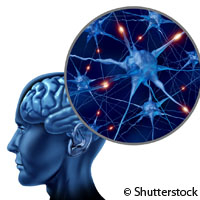 Study shows how brain rhythms impact learning