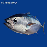 Scientists find tuna and billfish species at risk