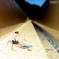 EU research shows magnetic fields, vibrations help ants navigate