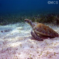 Sea turtles find protected cover