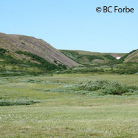 Global warming transforming Arctic shrubs into forest