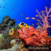 Limit climate change to save coral reefs