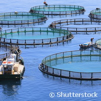 Shaping the future of Europe's aquaculture