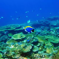 Coral reefs that may be resistant to climate change