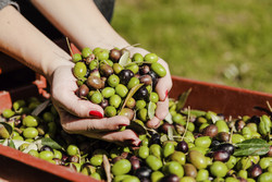 Turning olive oil waste into energy to benefit rural economies