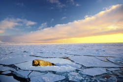 Arctic warming: 'What happens at the poles does not stay at the poles'