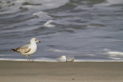 Trending science: 99 % of seabirds could be eating plastic by 2050
