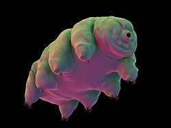 Trending Science: Scientists revive microscopic tardigrade after 30 years of deep freeze