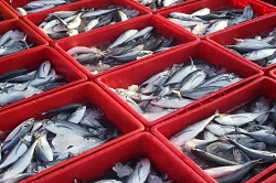 New blueprints for managing Europe's fisheries