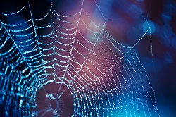 Spiders teach scientists how to create a completely novel liquid-solid material