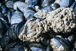 The impact of sunshine on mussel beds