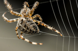 Where nature meets science – spider webs made out of graphene