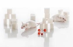 La ricerca sui topi individua nuovi geni responsabili del diabete