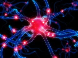 Tendenze scientifiche: Le cellule del nostro cervello muoiono mentre invecchiamo? Una nuova ricerca sostiene il contrario