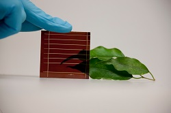 Perovskite-silicon solar cell combination helps researchers achieve high efficiency in photovoltaic power generation
