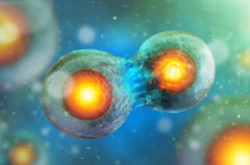Researchers develop the first dynamic map of human cell division