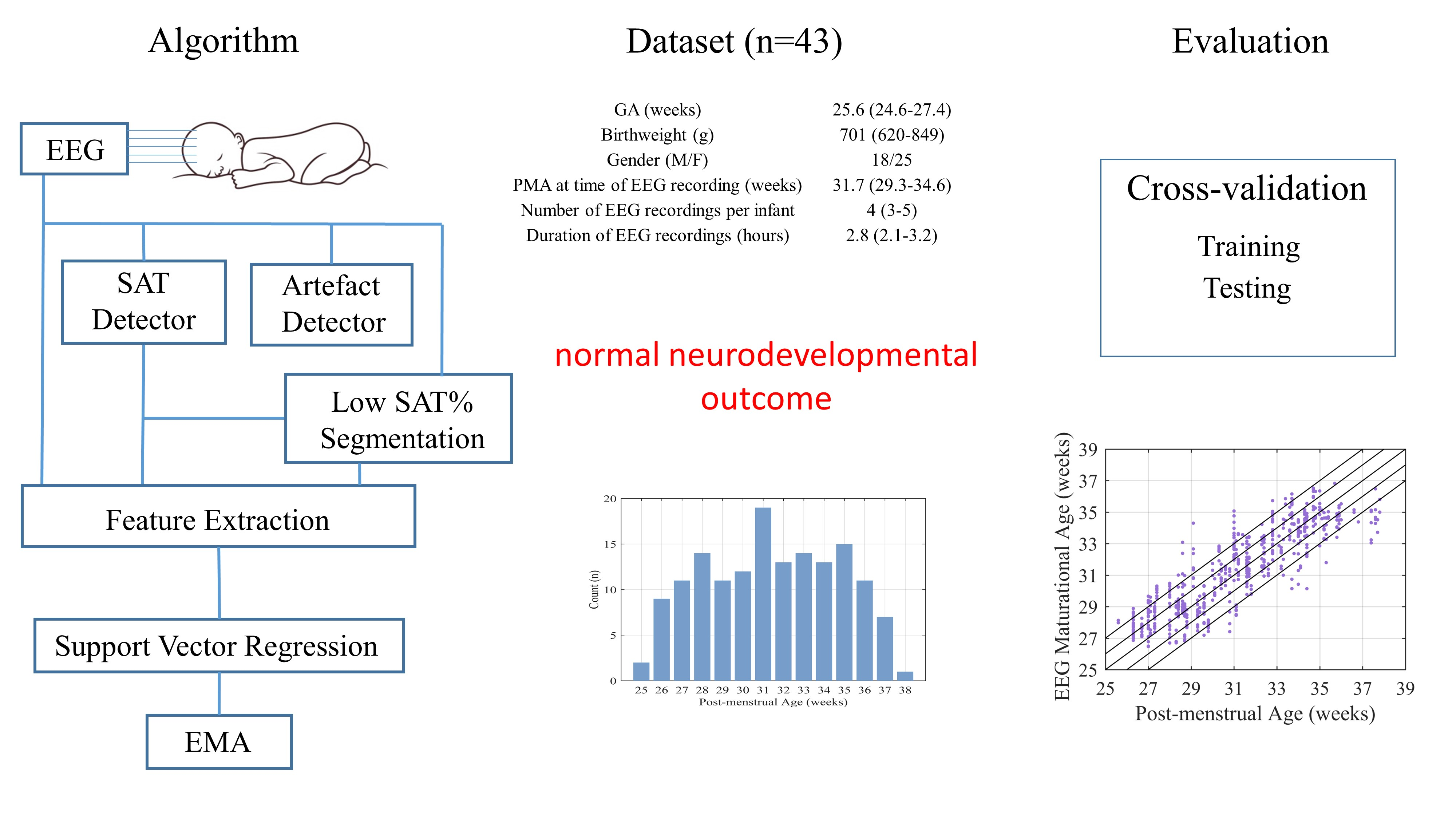 Periodic Reporting for period 1 - APE (An analyzer for preterm EEG