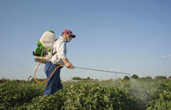 Biosensors help keep pesticides off our plate