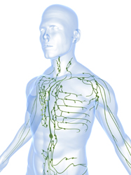 Analysis of the lymphatic system