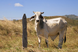 The future of livestock farming and climate change