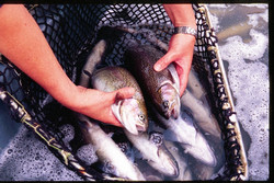 Integrated approach to make better tools available for aquaculture research