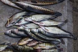 beaucoup plus de poissons datant du site du Royaume-Uni rencontres Galati
