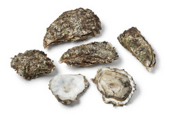 For oysters, resistance to death is in the genes