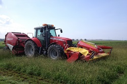 Growing grasses on the margins - the route to cost effective biomass crops