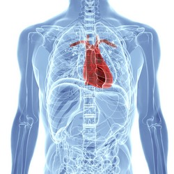 Biomarkers for cardiovascular diseases expanded