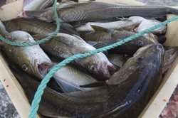 Improved management of Europe's fish stocks