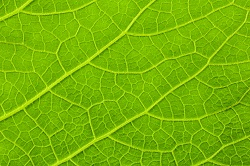 On track for enhanced photosynthesis in certain crops