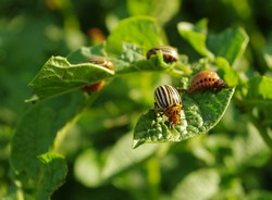 EU-wide coordination for a more harmonised approach to pest management