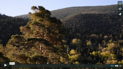 The forest of Mont Ventoux – a natural laboratory to study the effects of climate change