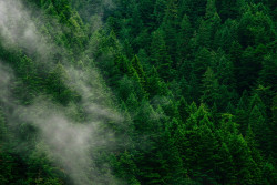 'Forest mobilisation:' unlocking Europe's wood energy potential