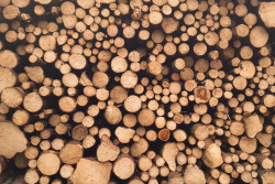 Is wood a sustainable resource?