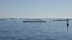 European Research project to boost Mediterranean fish farming