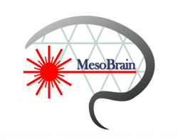 MESO-BRAIN initiative receives €3.3million to replicate brain's neural networks through 3D nanoprinting