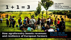 1+1=3 Agroforestry boosting revenues and resilience