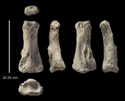 The oldest directly dated modern human fossil found outside of Africa and the Levant