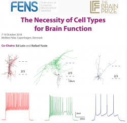 The Brain Conferences: The Necessity of Cell Types for Brain Function