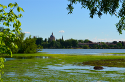 Urban GreenUP at the World Forum on urban forests in Mantua