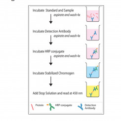 A Practical Guide to Immunoassay Method Validation
